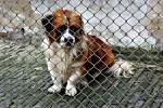 118 tys. zł na opiekę nad bezdomnymi zwierzętami. Jakie obowiązki ma gmina wobec zwierzęcia pozostającego bez opieki